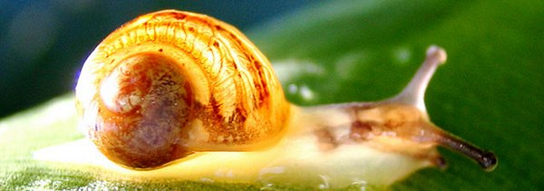 internet escargot