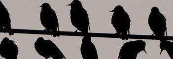 bandeau oiseau
