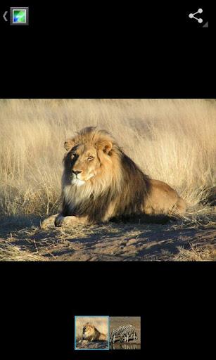 lion gallery ics Gallery ICS disponible pour tous...