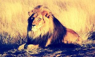 retouche lion gallery ics