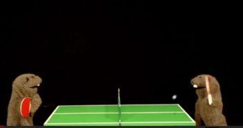fafa ping pong