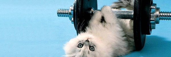 chat-poids-fitness-sport